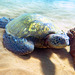 green sea turtle at rest