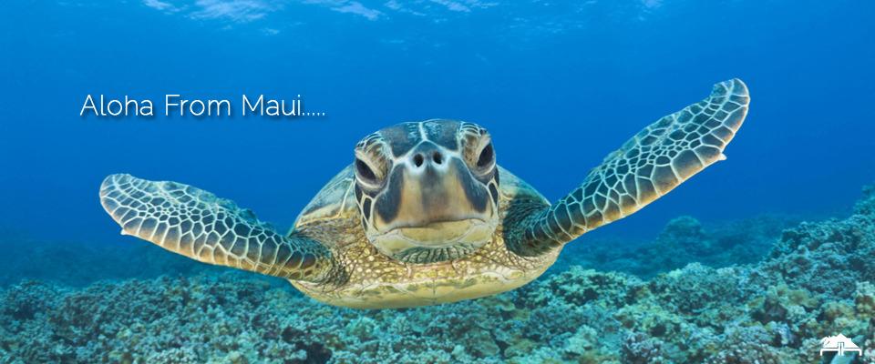 Maui Property Management | Vacation Rentals & Real Estate Sales ...