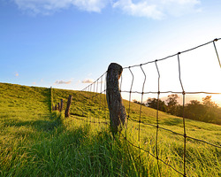 Upcountry Fence Line in Olinda Maui