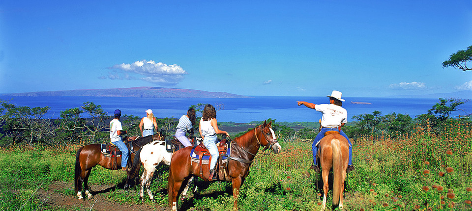 Upcountry Maui Horseback Ride - Aloha Cottage
