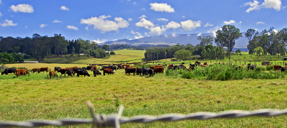 Upcountry Pasture - Aloha Cottage